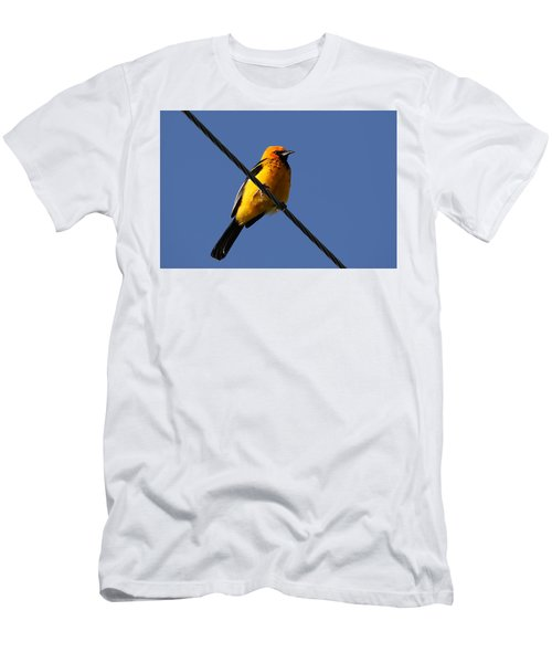Spot Breasted Oriole Men's T-Shirt (Athletic Fit)