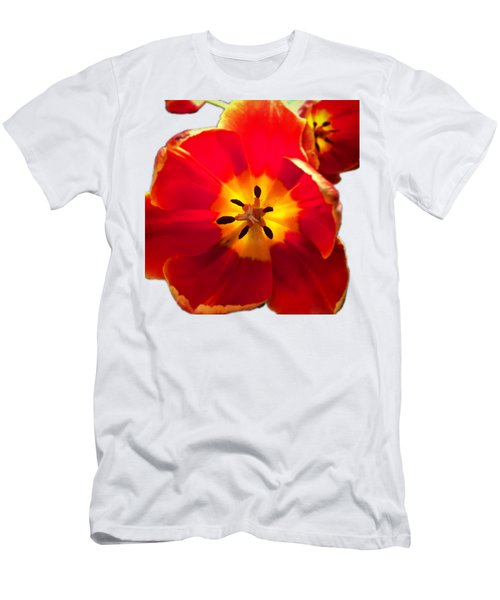 Sunkissed Tulips Men's T-Shirt (Athletic Fit)