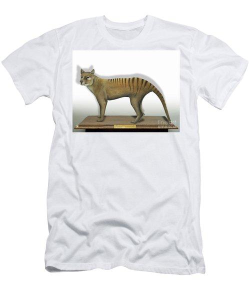 Tasmanian Tiger-thylacinus Cynocephalus-tasmanian Wolf-lobo De Tasmania-tasmanian Loup-beutelwolf    Men's T-Shirt (Athletic Fit)