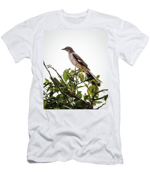 The Northern Mockingbird Men's T-Shirt (Athletic Fit)