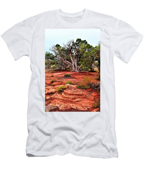 The Tree That Knows All Men's T-Shirt (Athletic Fit)