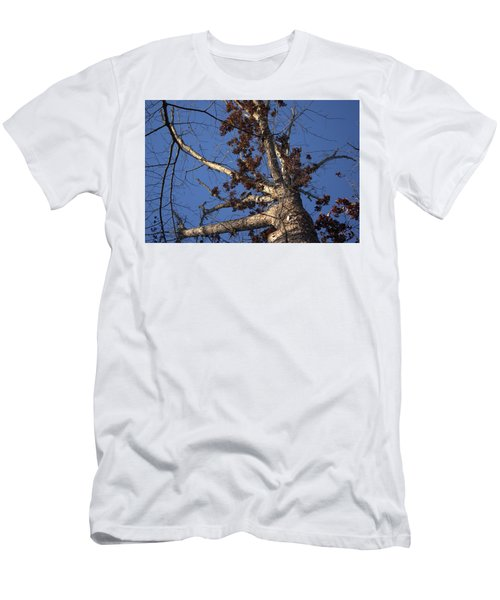 Tree And Branch Men's T-Shirt (Athletic Fit)
