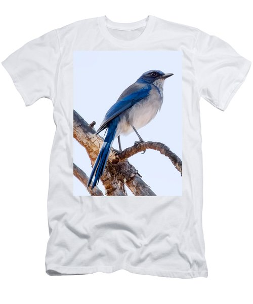 Western Scrub-jay Men's T-Shirt (Athletic Fit)