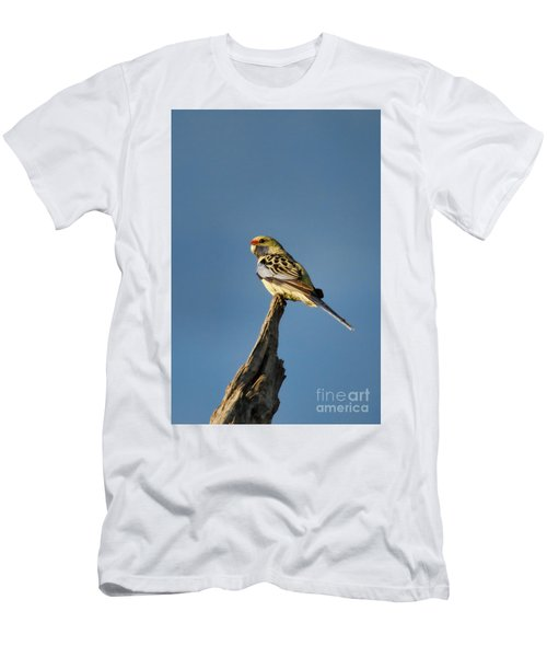 Yellow Crimson Rosella Men's T-Shirt (Slim Fit) by Douglas Barnard