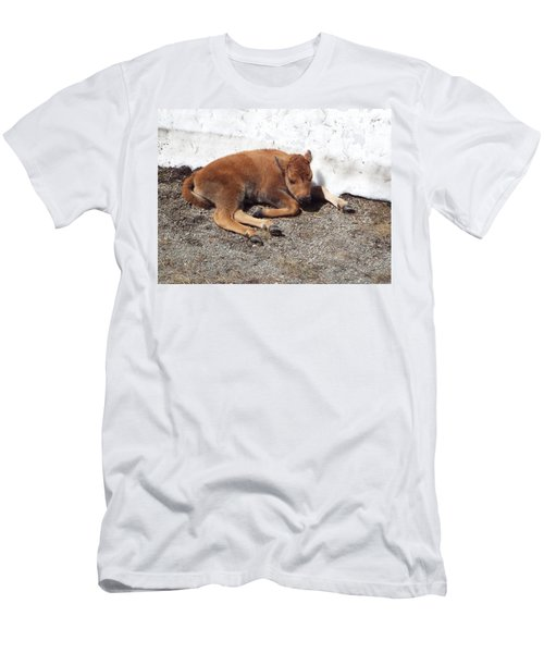 Yellowstone Bison Calf  Men's T-Shirt (Athletic Fit)