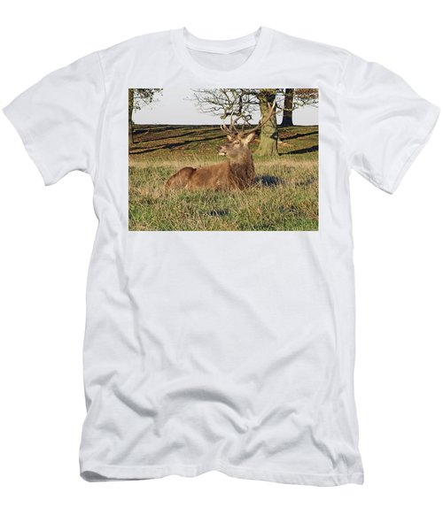 28/11/18  Tatton Park. Stag In The Park. Men's T-Shirt (Athletic Fit)