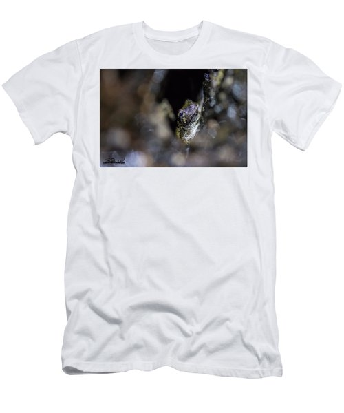 Grey Tree Frog Men's T-Shirt (Athletic Fit)