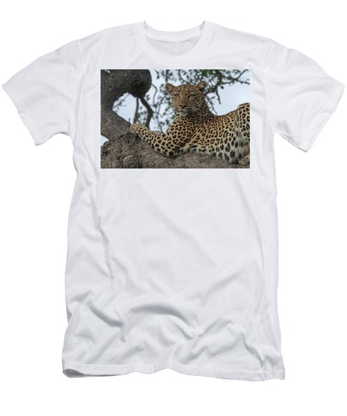 A Leopard Gazes From A Tree Men's T-Shirt (Athletic Fit)