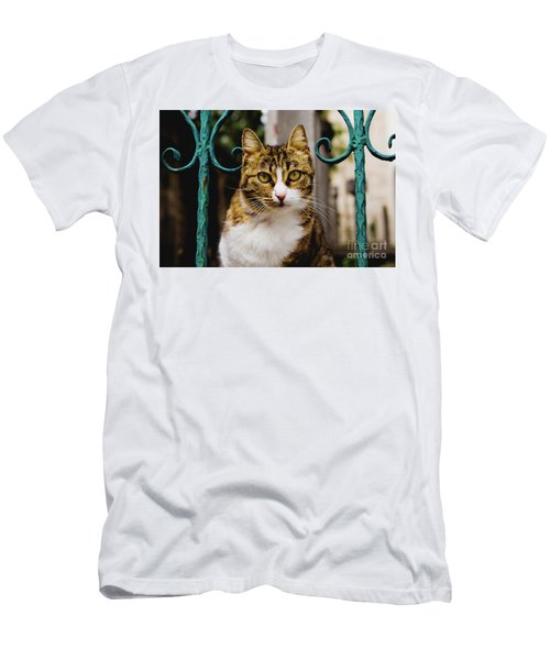 Cat On A Fence Men's T-Shirt (Athletic Fit)