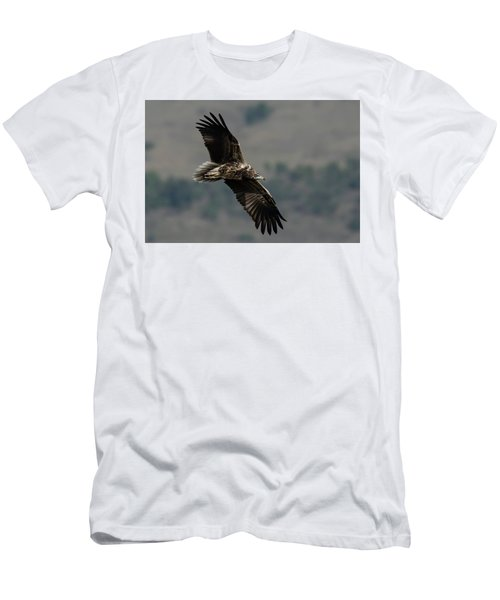 Egyptian Vulture, Sub-adult Men's T-Shirt (Athletic Fit)