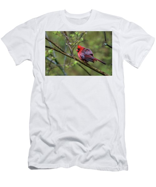 Fluffing Up My Feathers Men's T-Shirt (Athletic Fit)