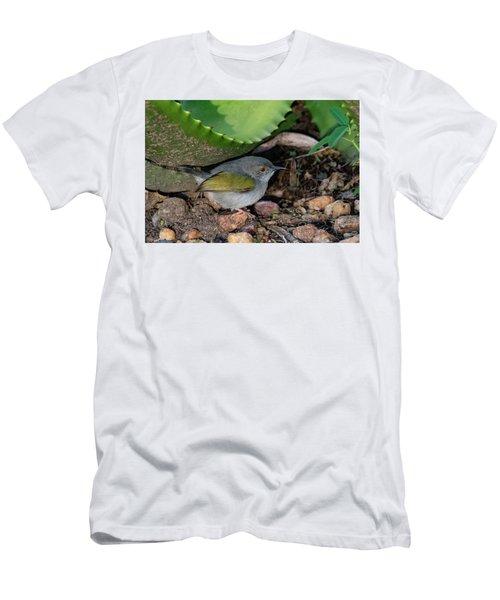 Gray-backed Camaroptera Men's T-Shirt (Athletic Fit)