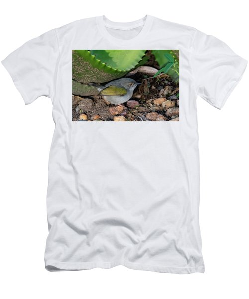 Gray-backed Camaroptera Men's T-Shirt (Athletic Fit)