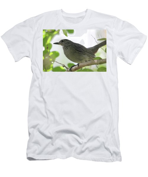 Men's T-Shirt (Athletic Fit) featuring the photograph Gray Catbird by Trina Ansel