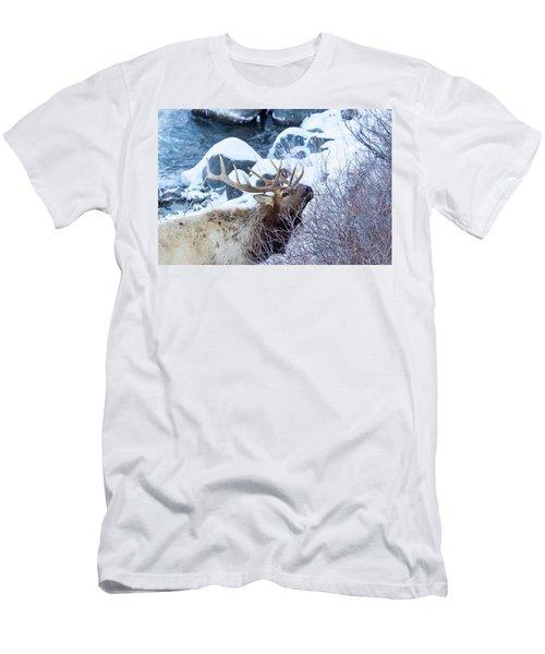 Grazing Elk Men's T-Shirt (Athletic Fit)
