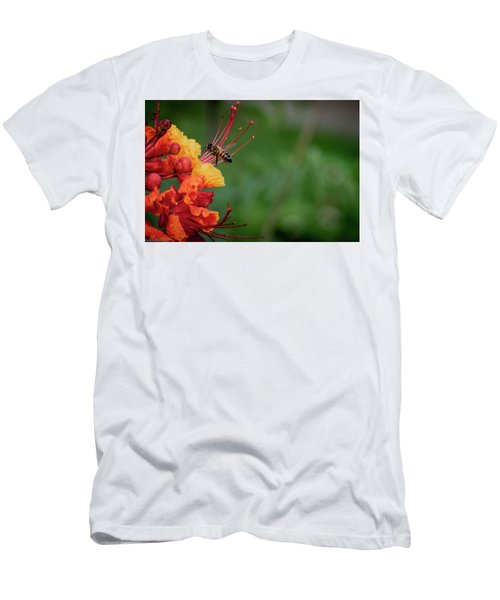 Honey Bee Extraction Men's T-Shirt (Athletic Fit)