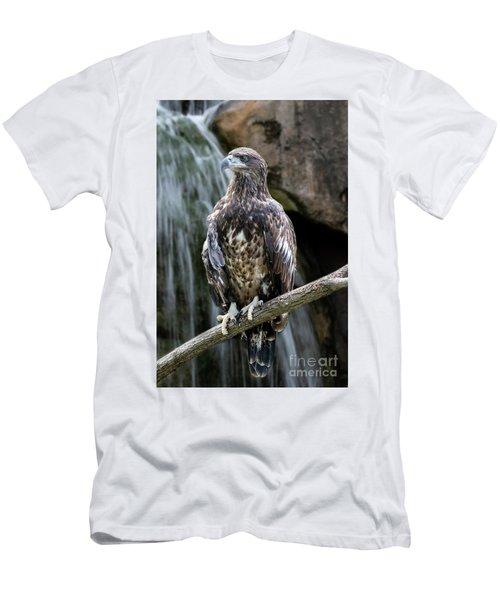 Juvenile Bald Eagle Men's T-Shirt (Athletic Fit)