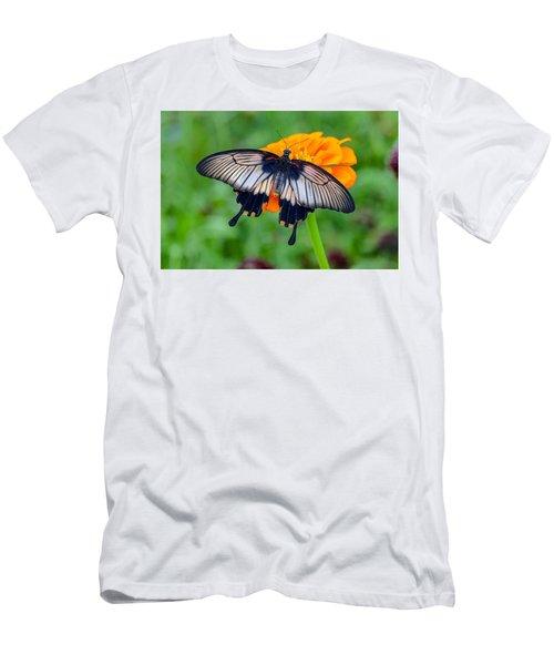 Kite Swallowtail  Men's T-Shirt (Athletic Fit)