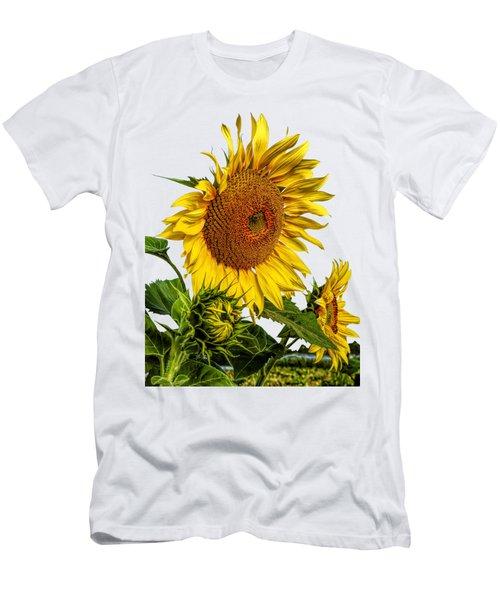 Large Sunflower T-shirt Men's T-Shirt (Athletic Fit)