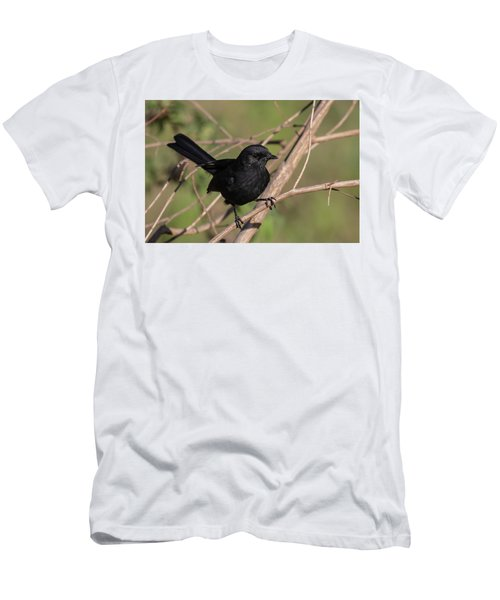 Northern Black Flycatcher Men's T-Shirt (Athletic Fit)