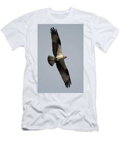 Osprey With Fish Men's T-Shirt (Athletic Fit)