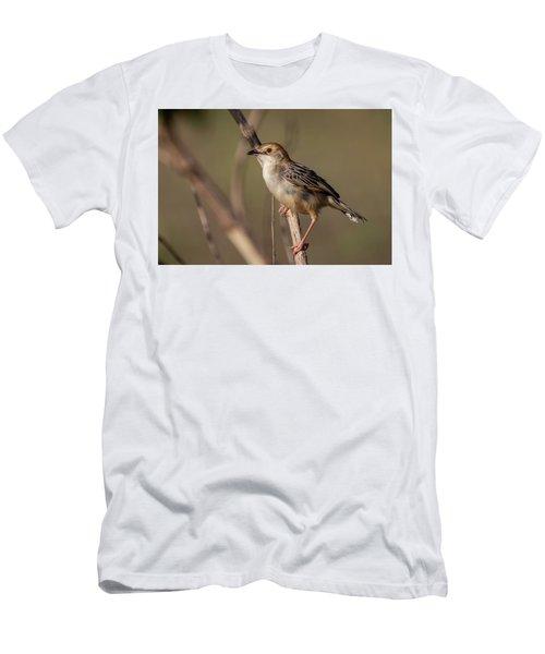Rattling Cisticola Men's T-Shirt (Athletic Fit)