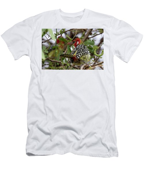 Red-and-yellow Barbet Men's T-Shirt (Athletic Fit)