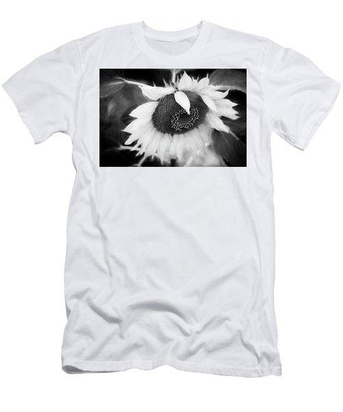 Sunflowers  Helianthus 036 Men's T-Shirt (Athletic Fit)