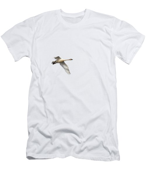Trumpeter Swan Isolated 2018-1 Men's T-Shirt (Athletic Fit)