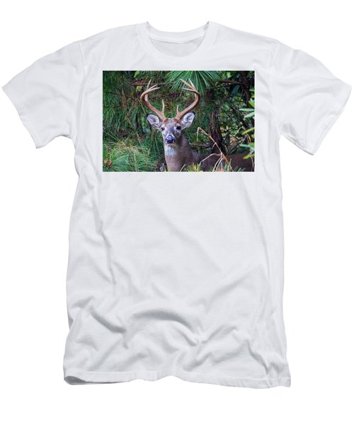 Whitetail Deer Men's T-Shirt (Athletic Fit)