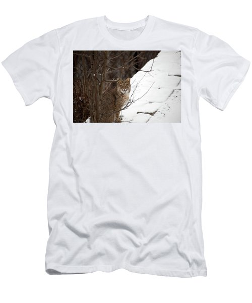 Winter Bobcat Men's T-Shirt (Athletic Fit)