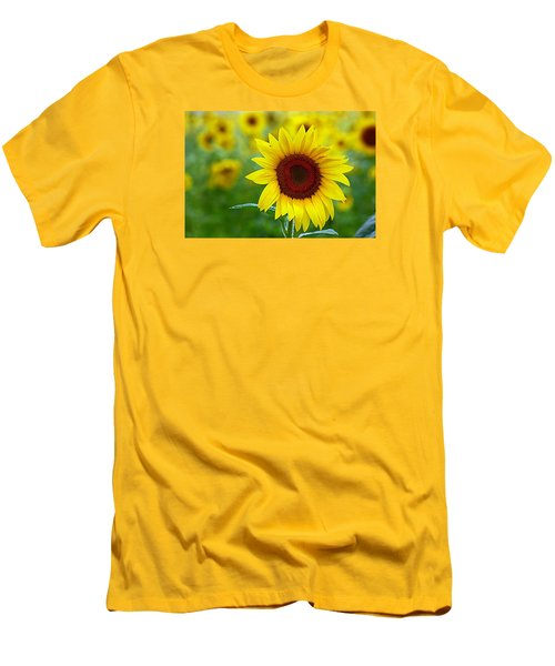 Sunflower Time Men's T-Shirt (Slim Fit) by Karen McKenzie McAdoo