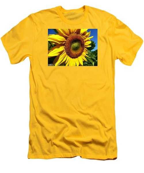 Huge Bright Yellow Sunflower Men's T-Shirt (Slim Fit) by Tina M Wenger