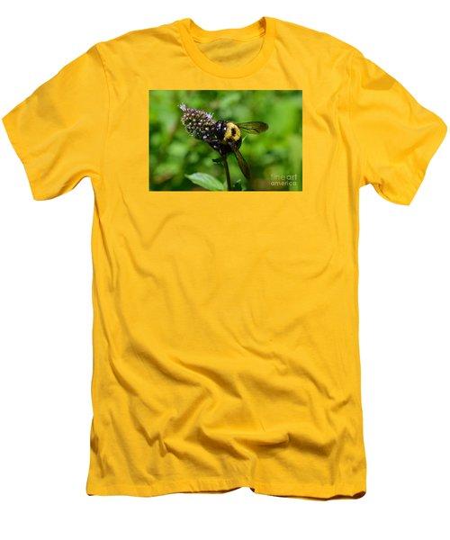 Spot, My Bumblebee Men's T-Shirt (Slim Fit) by Lew Davis