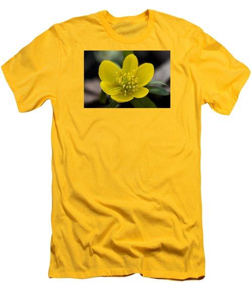 Winter Aconite Men's T-Shirt (Slim Fit) by Dan Hefle