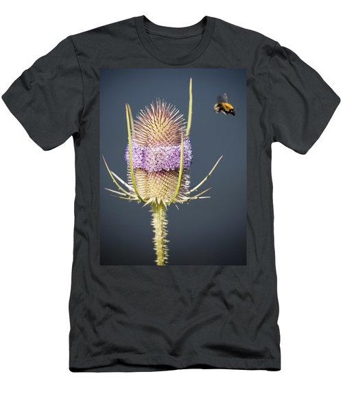Beautiful Flowering Teasel Men's T-Shirt (Athletic Fit)
