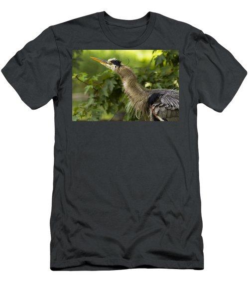 Heron In Breeding Plumage Men's T-Shirt (Athletic Fit)