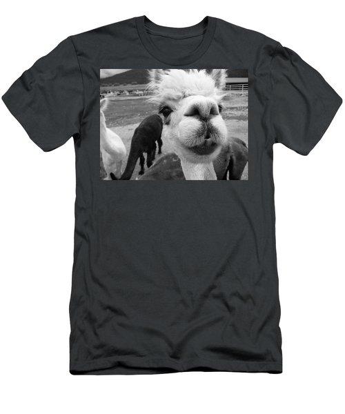 Alpaca Face Men's T-Shirt (Athletic Fit)
