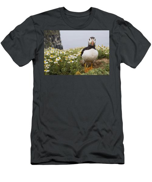 Atlantic Puffin In Breeding Plumage Men's T-Shirt (Slim Fit) by Sebastian Kennerknecht