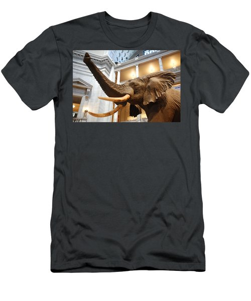 Bull Elephant In Natural History Rotunda Men's T-Shirt (Athletic Fit)