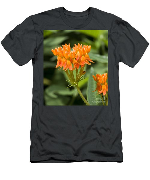 Butterfly Weed Men's T-Shirt (Athletic Fit)