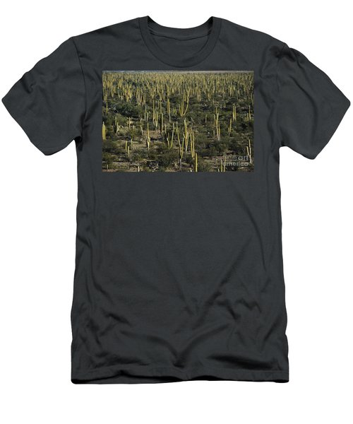 Cardon Cacti In Mexico Men's T-Shirt (Athletic Fit)