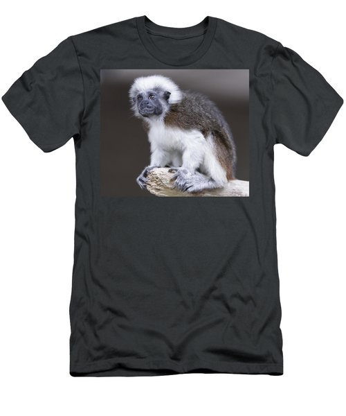 Men's T-Shirt (Slim Fit) featuring the photograph Cotton Top Tamarin by Shoal Hollingsworth
