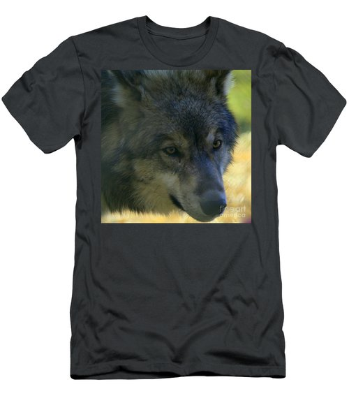 Gray Wolf Men's T-Shirt (Slim Fit)