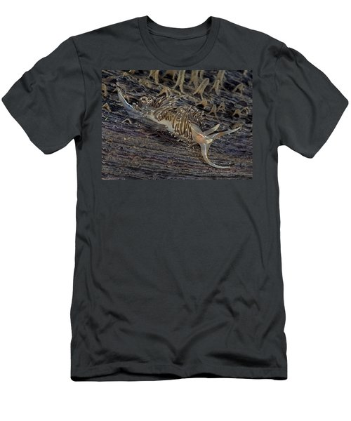 Nudibranch Sitting On A Pen Shell Men's T-Shirt (Athletic Fit)