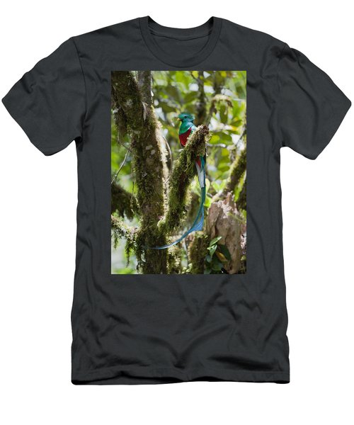 Men's T-Shirt (Athletic Fit) featuring the photograph Resplendent Quetzal Male Costa Rica by Konrad Wothe