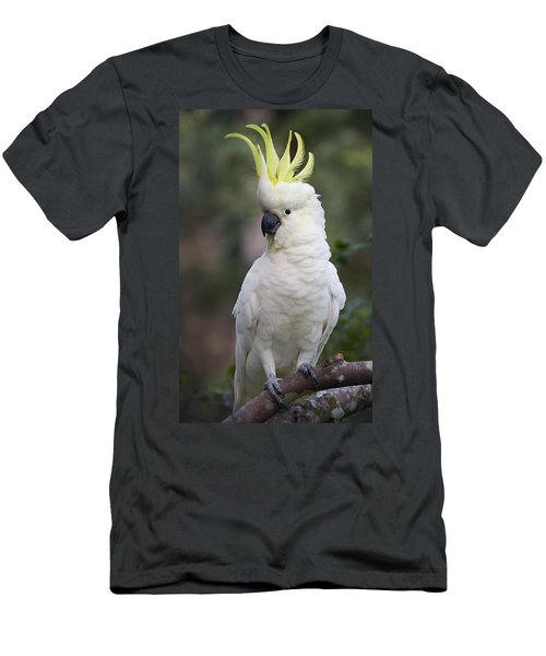 Sulphur-crested Cockatoo Displaying Men's T-Shirt (Athletic Fit)