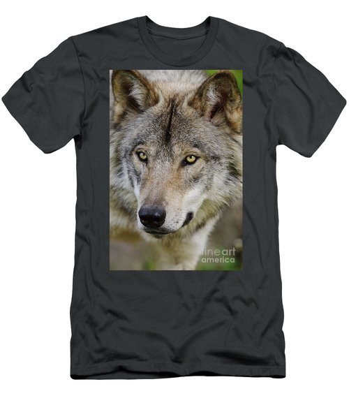 Timber Wolf Portrait Men's T-Shirt (Athletic Fit)