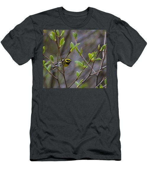 Townsends Warbler Men's T-Shirt (Athletic Fit)