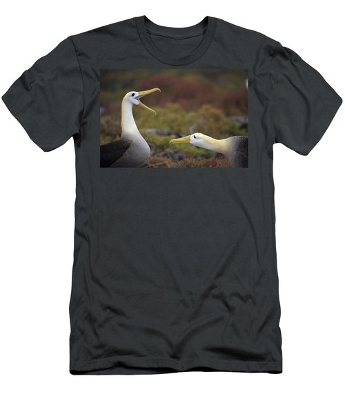 Waved Albatross Courtship Display Men's T-Shirt (Slim Fit) by Tui De Roy